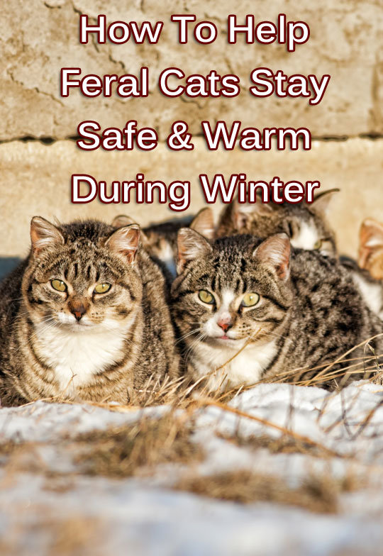 how to help feral cats stay safe warm during winter thecatsite