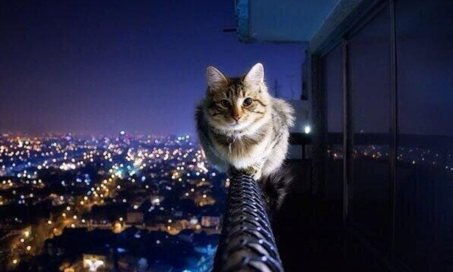 high wire cat.jpg