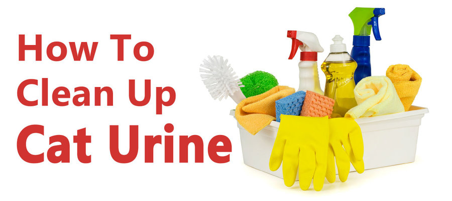 How To Remove Cat Urine Odor From Carpet Peroxide ...