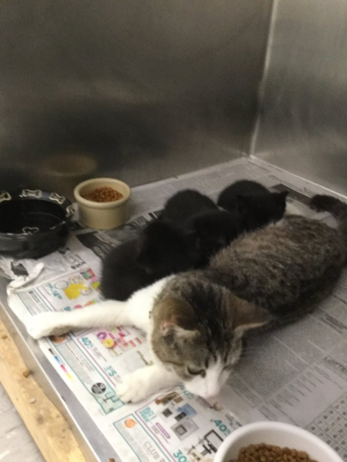 the cats at our shelter page 2 thecatsite