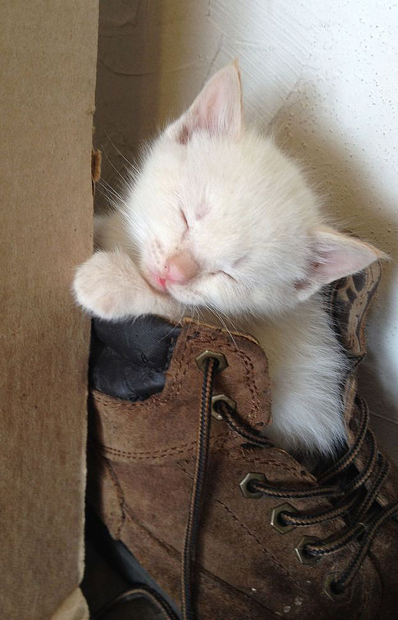 kitten sleeping boot.jpg