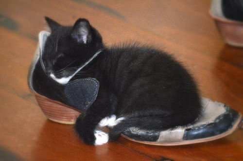 kitten sleeping on shoe.jpg