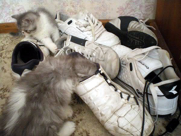kittens in shoes.jpg