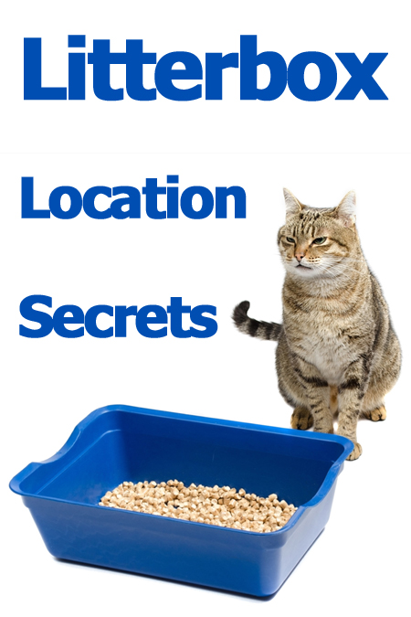 Litterbox location secrets: Find out where you should put the litterbox (and where you absolutely shouldn't!)