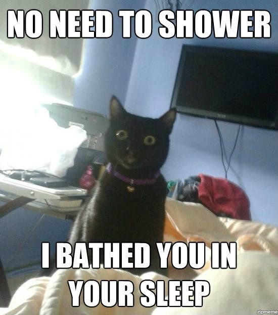 overly-attached-cat_zpsdffc8c06.jpeg