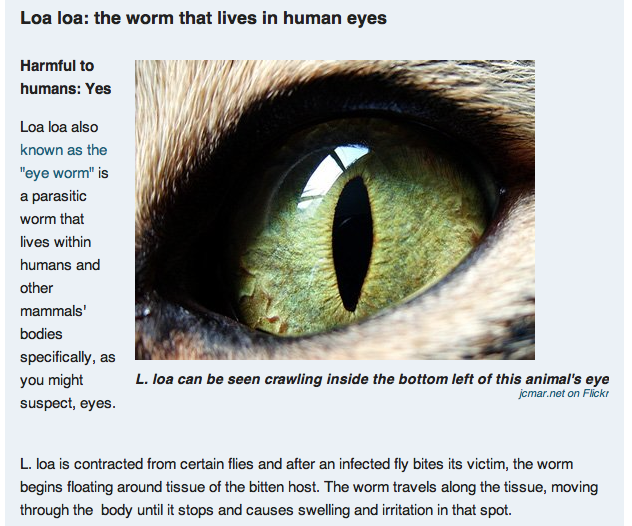 Worms In Cat Eyes