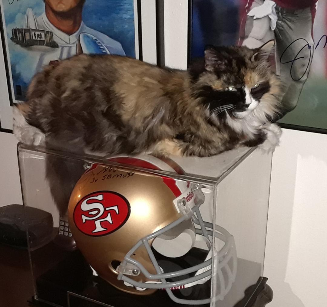 She likes hanging out on the helmet case...